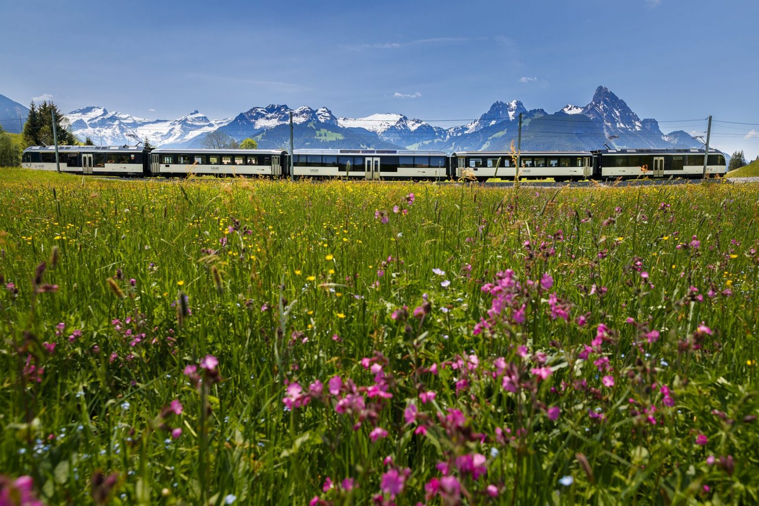 GoldenPass Panoramic met bloemen